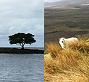 Islands to Glens